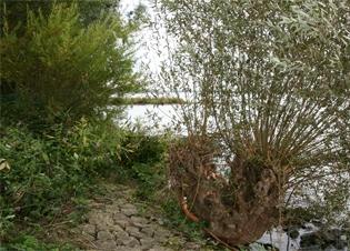 Afbeelding Waterbodems als mogelijke belemmering van de KRW-doelen in de Nederrijn-Lek