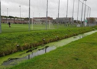 Afbeelding De milieurisico's van rubbergranulaat in kunstgrasvelden