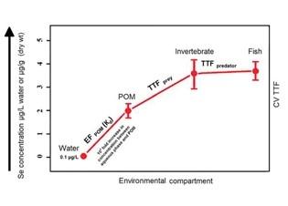 Afbeelding Literatuur studie naar de bioaccumulatie van seleen