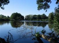 Afbeelding Nalevering van fosfaat uit de waterbodem in zwemplassen en een riviertje