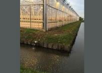 Afbeelding Data-analyse waterkwaliteit voor meer begrip van emissies vanuit glastuinbouw